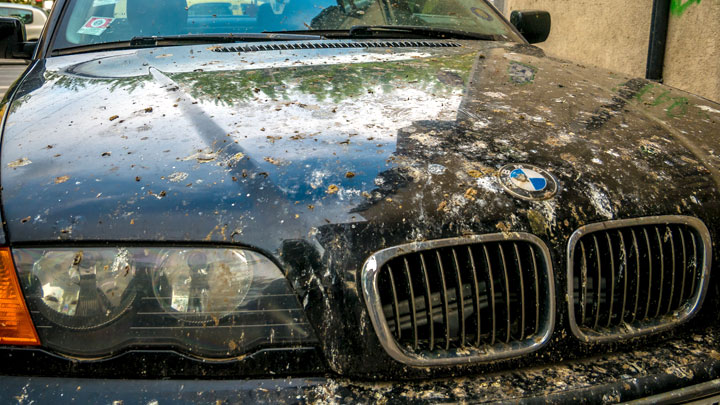 how to remove bird poop from car