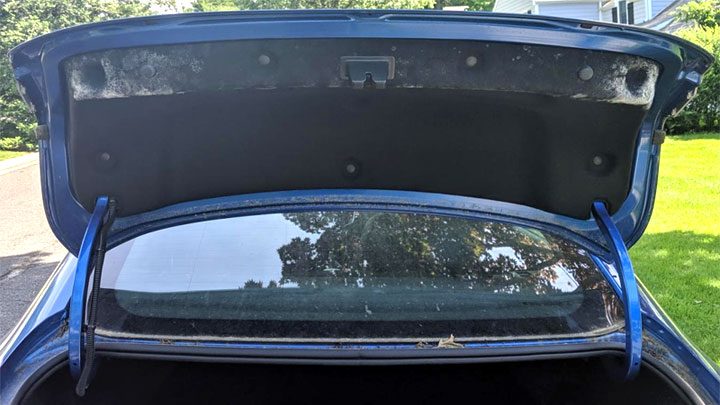 mold in trunk